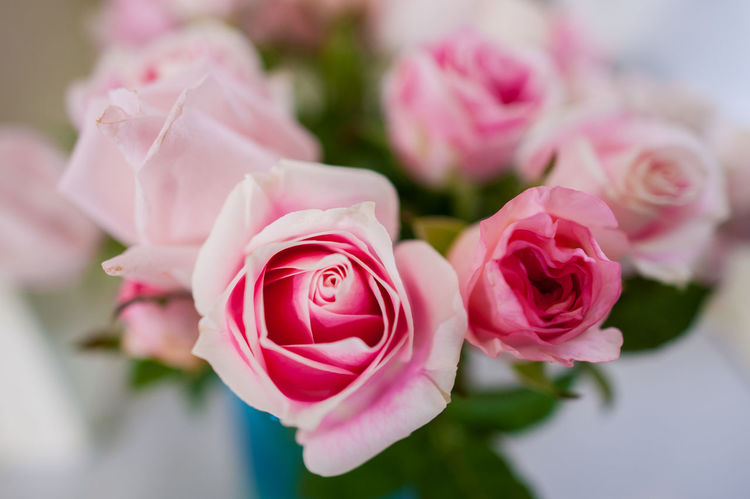 Rose Petals Rose Collection Rose Hip Rosemary Roses Are Red Roses, Flowers, Nature, Garden, Bouquet, Love, Roses_collection Rose♥ RØSE Rose - Flower Rose Flower Rose Garden Rose Window Rosen Roses Roses Flowers  Roses🌹 Rose🌹 Rosé