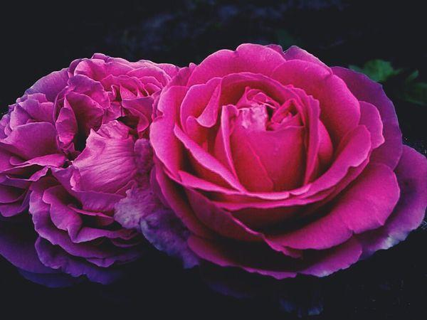 Flower Rosé Pink