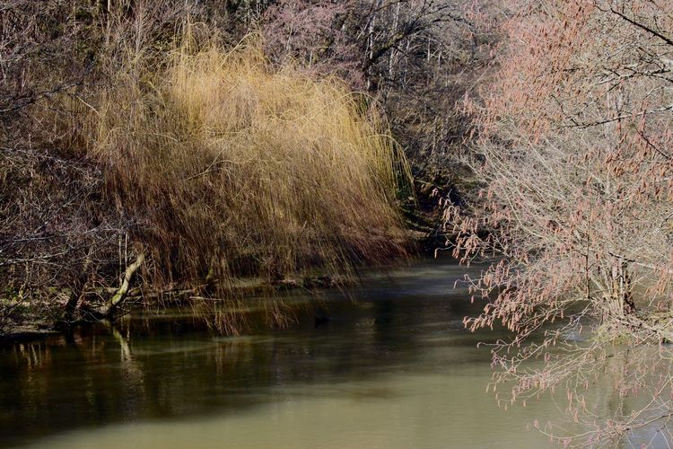 Nature Water Beauty In Nature No People Tranquility Tranquil Scene River Reflection Tree Outdoors