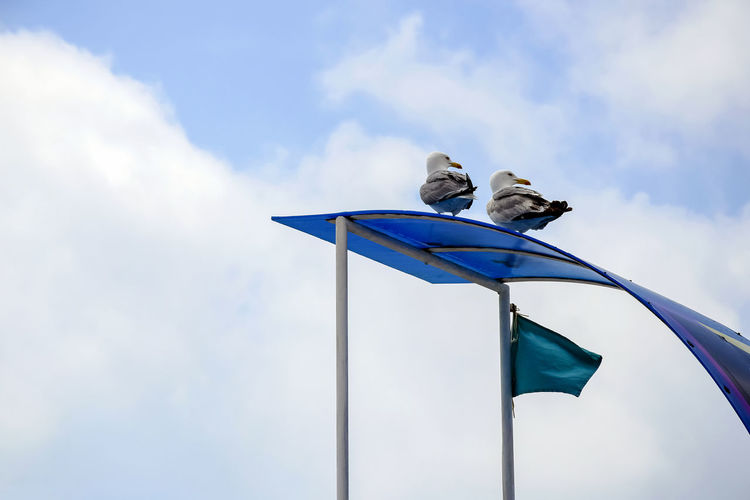Two seagulls are sitting on roof of rescue tower and looking to side.