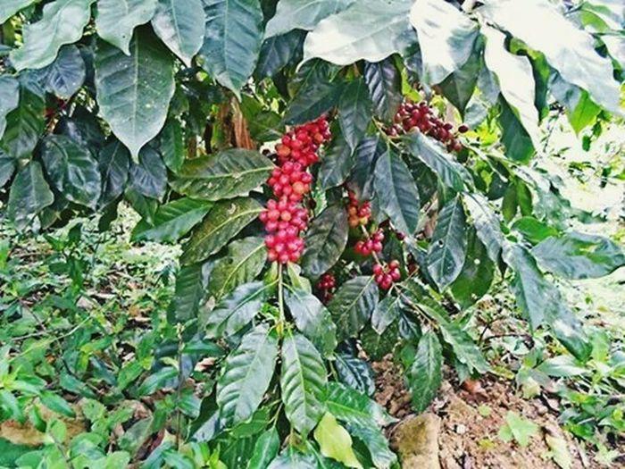 Coffee Time Coffee Ilovecoffee