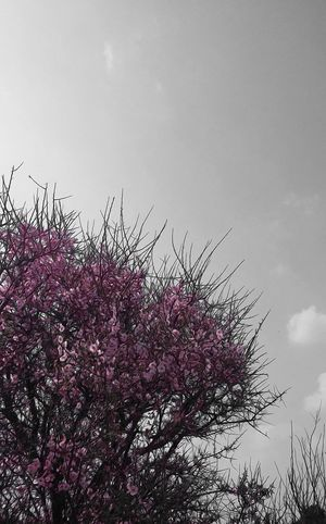 Nature Tree Beauty In Nature Outdoors Sky Freshness Day Colorsplash_of_our_world