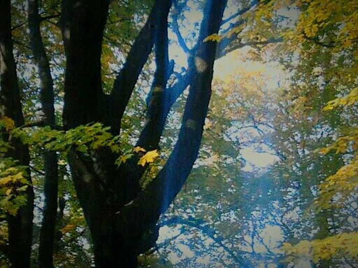 Park A Pain Trip Day Beauty In Nature Tree Sun Day ☀ Trees