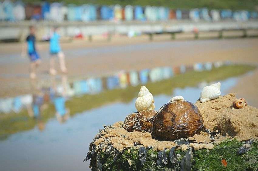 Odd little collection From The Sea Sea Shells and Seaweed Groyne Day At The Beach Beach Day At The Beach British Seaside Seaside Beach Huts Reflections Sunny Day Sand Sandy Beach Frinton-on-Sea United Kingdom Nikon D3200