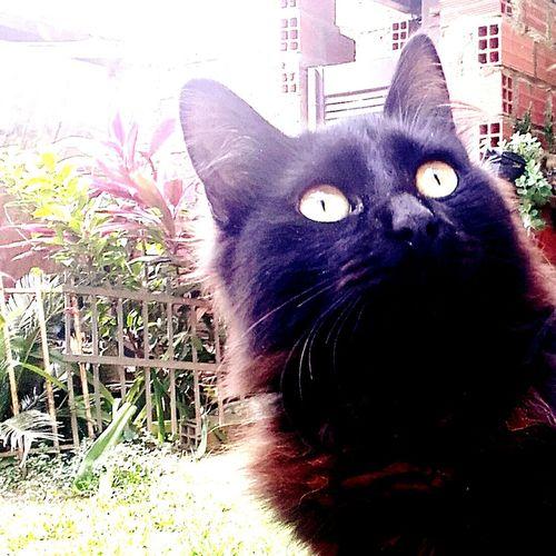 Mi life Observando Followme Mirando PhonePhotography Life Goodafternoon Dongato Neko Cat