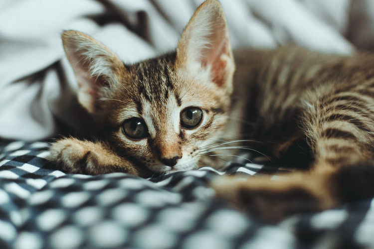 Close-up portrait of kitten relaxing on bed