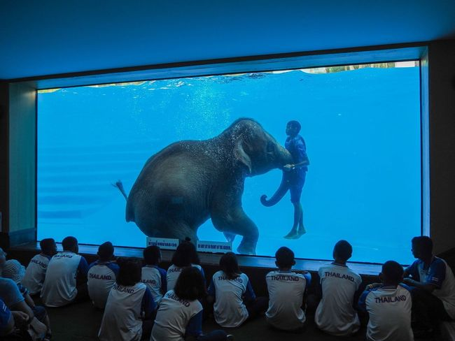 Photography ASIA ASIA Thailand Shower Elephant Group Of People Water Sea Animals In Captivity Transparent Real People Aquarium Nature Swimming Underwater Men Watching