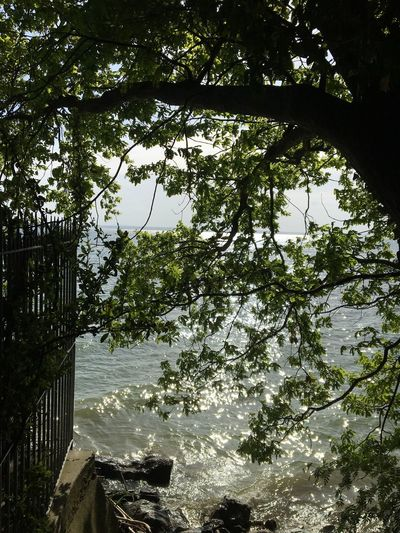 Bodensee durch Frühlingslaub mit Sonnenlicht Reflexionen auf dem Wasser, Spring Reflexions Bodensee Tree Plant Water Nature Sky Branch No People Beauty In Nature Reflection Sunlight Outdoors Scenics - Nature