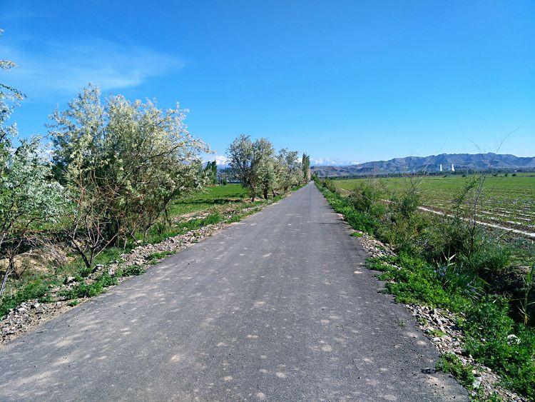乡间小路 Road Tree Sky Growing Farmland Countryside Treelined
