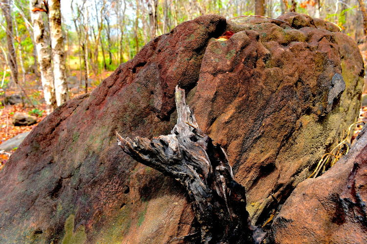 Dead Tree Rock Animal Themes Beauty In Nature Big Rock Close-up Day Dead Dead Tree By A Big Rock In Dry Wood Dry Forest Dry Wood Forest Nature No People Outdoors Summer Tranquility Tree Tree Trunk