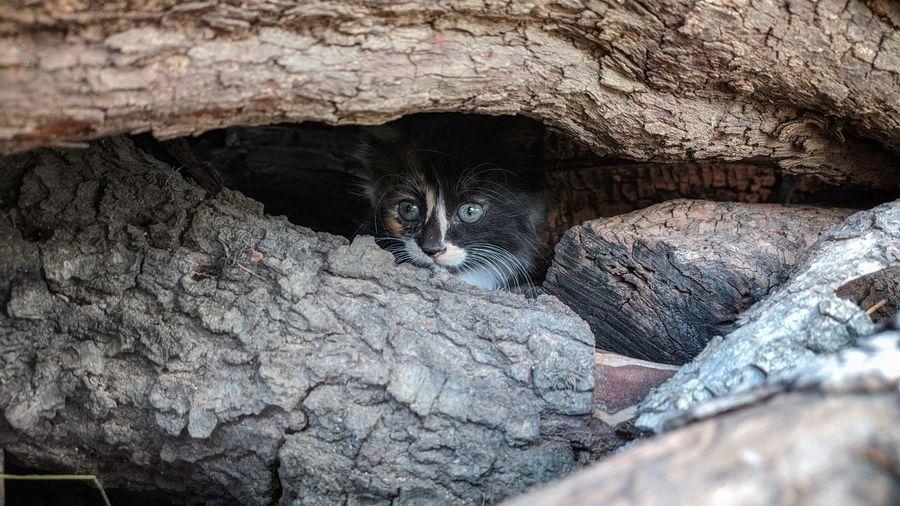 Portrait of cat hiding behind rock