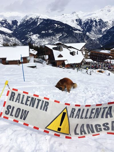 Dog on snowcapped landscape