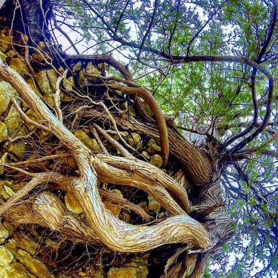 Beneath Tree TreePorn Roots Natural Natural Beauty Get Outside Detail Nature Nature_collection Nature Photography Naturelovers Nature On Your Doorstep Nature_perfection Naturelover Outdoors Outdoor Photography Outside The Great Outdoors With Adobe
