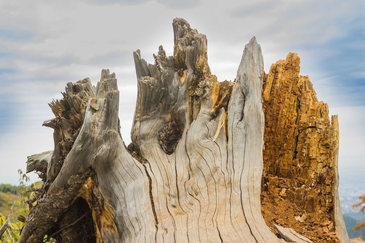 Beauty In Nature Cloud - Sky Day Driftwood Nature No People Non-urban Scene Rough Scenics - Nature Sky Textured  Tree Tree Trunk Wood - Material