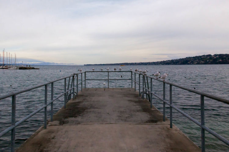 Birds View Architecture Bridge Bridge - Man Made Structure Built Structure Composition Connection Diminishing Perspective Engineering Footbridge Geneva, Switzerland, Europe, European, Geneva Lake, Lake, Water, Seagulls, Birds, Mountains, Cloudy, Clouds Leading Long Narrow Perspective Pier Railing Steps SUPPORT The Way Forward Water