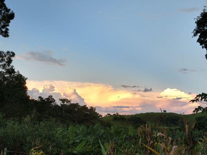 Tree Sunset Sky