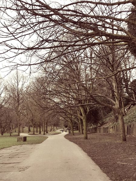 Tree Nature Outdoors The Way Forward No People Day Beauty In Nature Sky City Liverpool Cathedral Path Pathway Junction