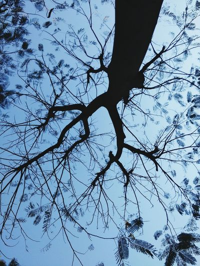 Tree And Sky From My Point Of View Nature Textures Tree Of Life In The Garden Silhouettes Of Trees Silhouette Tree Nature Art Light And Shade Garden Mobilephotography Evening Time From Where I Sit Trees Evening Nopeople Nature From Below Pattern, Texture, Shape And Form Pattern Pieces Silhouettes Beauty In Nature Beautiful Nature From My Polnt Of View