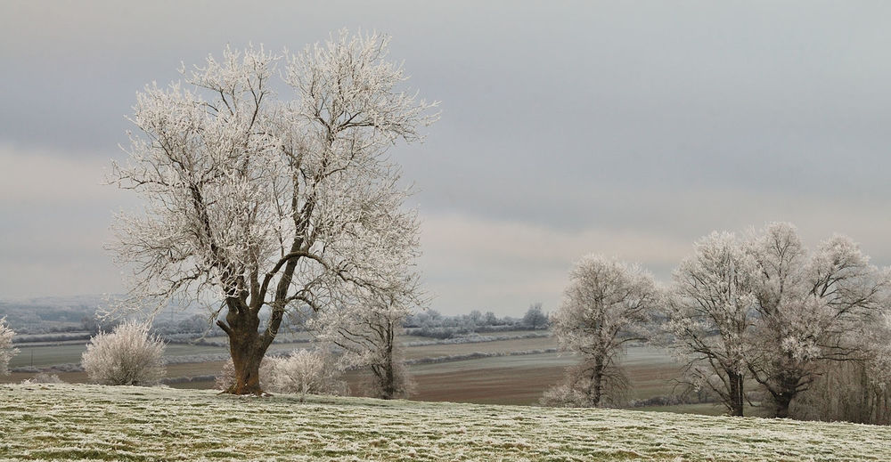 Almond Tree Arbres Beauty In Nature Branch Campagne Champs Day Igersyonne Nature No People Outdoors Paysage Sky Tree Tree Winter