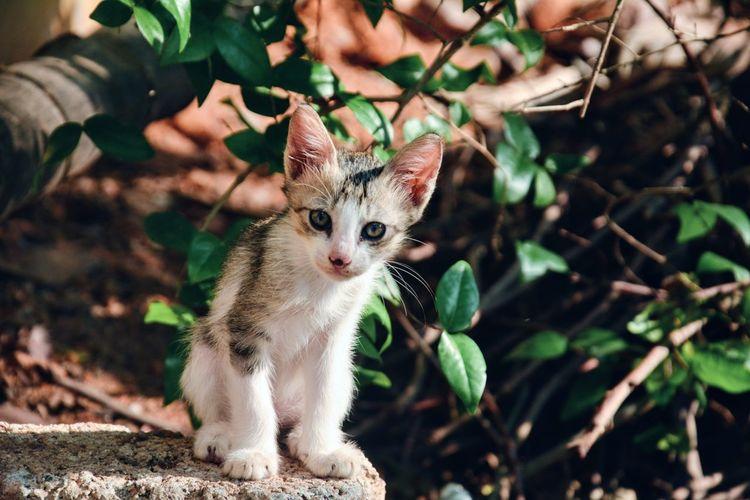 Portrait of a kitten jungle