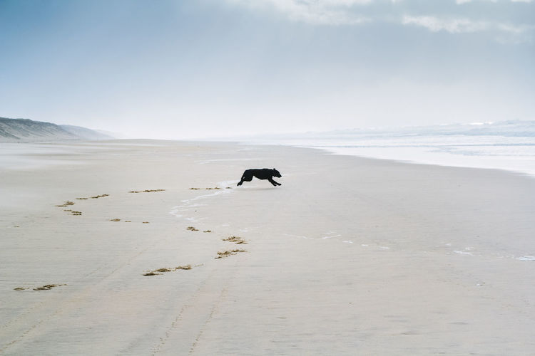 Adventure Black Dog Day Dog Flat Coated Retriever Hunting Dog Landscape Nature Nature Reserve One Person Only Men Outdoor Pursuit Outdoors Retriever Sand Sand Dune Scenics Sky Snow Wilderness