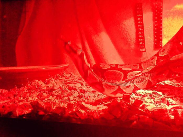 Happy Halloween Snakeeeeeee!!!!!! Red Lights,snake Bites