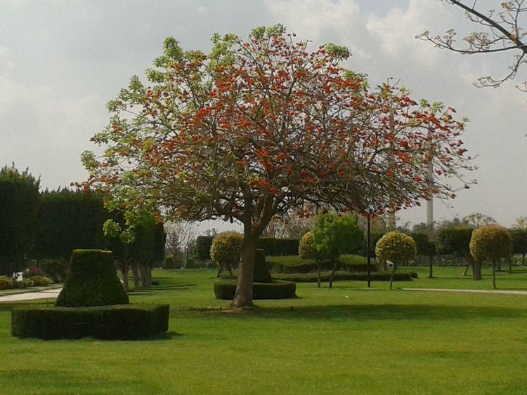 TreePorn Flowers,Plants & Garden Nature_collection EyeEm Nature Lover