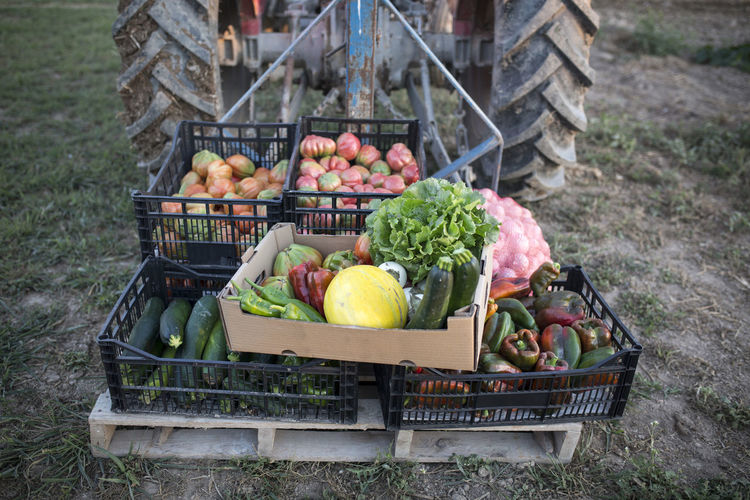 Fruits and vegetables in box