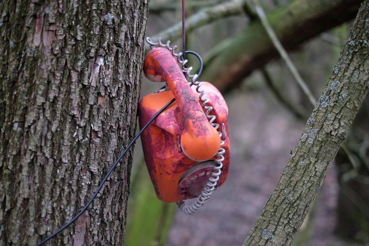 Close-up of abandoned telephone hanging by tree