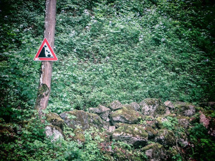 Attention! Rockfall! Attention Landslide Beauty In Nature Close-up Communication Danger Dangerous Day Forest Guidance Nature No People Outdoors Plant Road Sign Rockfall Tranquility Tree Tree Trunk Warning Warning Sign