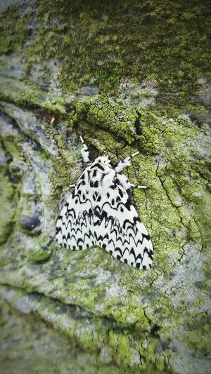 Insect Moth Nature Outdoors On A Tree Patterns Wings