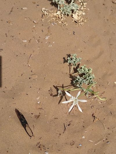 High angle view of plant on sand