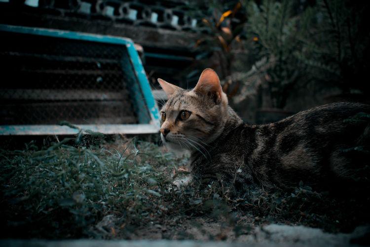 Portrait of a cat lying on land