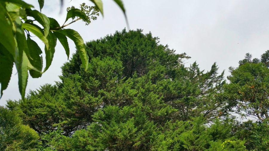 árvores Arboles Arbres Trees Mundo Vegetal