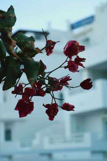 Close-up of red flowers blooming on tree against sky