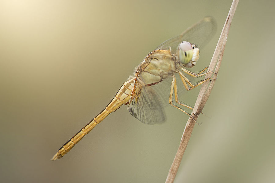 # #Dragonfly #FlyLife #JustMe #Nature #Beautiful #Leaf #Autum #Photography #animals #animal #pet #TagsForLikes #dog #cat #dogs #cats #photooftheday #cute #pets #instagood #animales #cute #love #nature #a #animals #animal #pets #birds #wildlife #wild #cityscape #landscape #nature #sunset #lake #vacation #trip #city #downtown #reflectio #dragon #summerpalace #china #traveling #asia #tourist #erasmus #fineart #photo #photos #pic #pics #picture #pictures #snapshot #art #beautiful #instagood #picoftheday #photooftheday #color #all_shots #exposure #composition #focus #capture #moment #photography #photo #photos #pic #pics #TagsForLikes #picture #pictures #snapshot #art #beautiful #instagood #picoftheday #photooftheday #color #all_shots #exposure #composition #focus #capture #moment #sunset #sun #clouds #skylovers #sky #nature #beautifulinnature #naturalbeauty #photography #landscape Animal Themes Animal Wildlife Animals In The Wild Close-up Day Nature No People One Animal Outdoors
