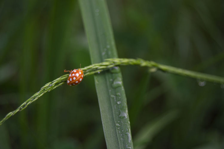 Close-up of wet insect on plant