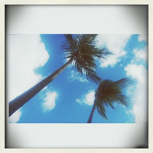 Wildchild High like Palm Trees