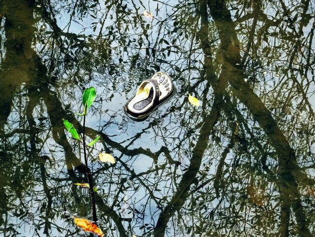 Somebody loose his slipper Nature Outdoors Tree Low Angle View Animal Themes Beauty In Nature Animals In The Wild One Animal Growth Forest No People Animal Wildlife Day Branch Reptile Sky
