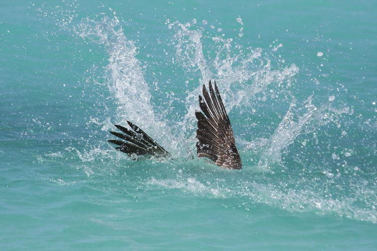 Bird diving into sea
