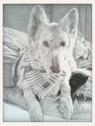 Art Portrait Dogs Check This Out a commission I finished yesterday