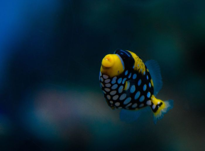 Multicolored Fish Underwater