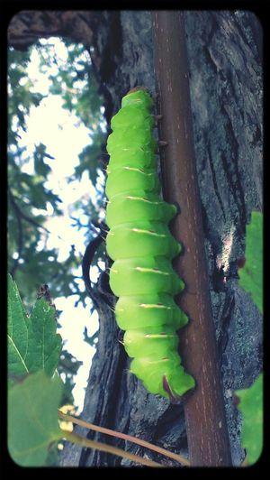 Taking Photos Caterpillar