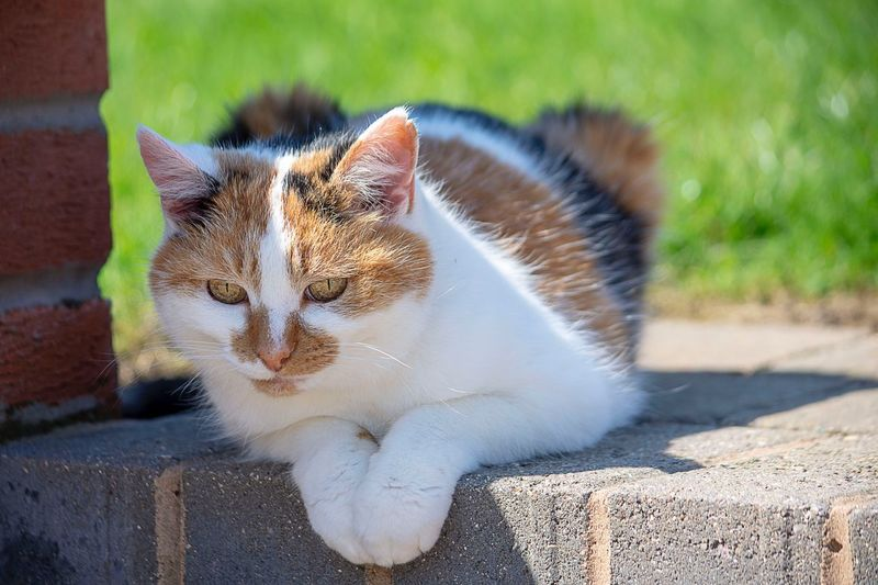 Portrait of cat resting on retaining wall