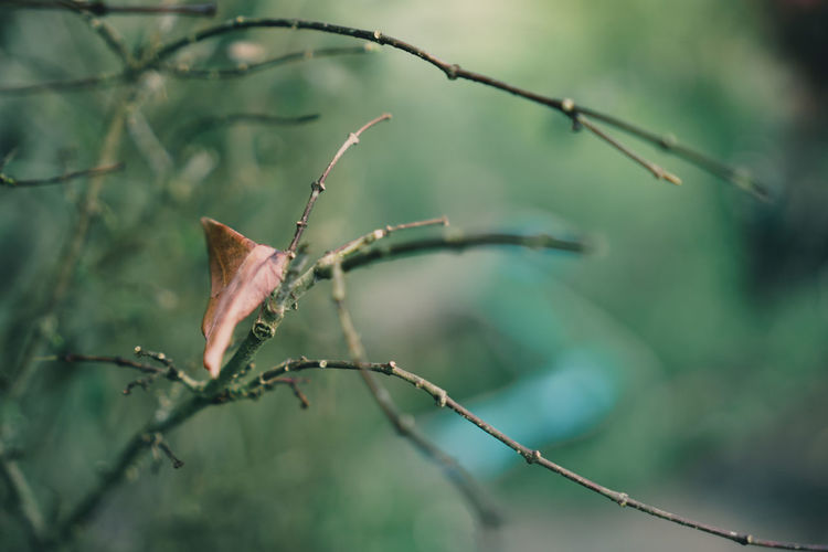 Just a dry leaf. Green Leaves🌿 Nature Branch Bugs Bugslife Close-up Day Focus On Foreground Insect Insects  Leaf Leaves Nature No People Outdoors Plant Selective Focus Tree