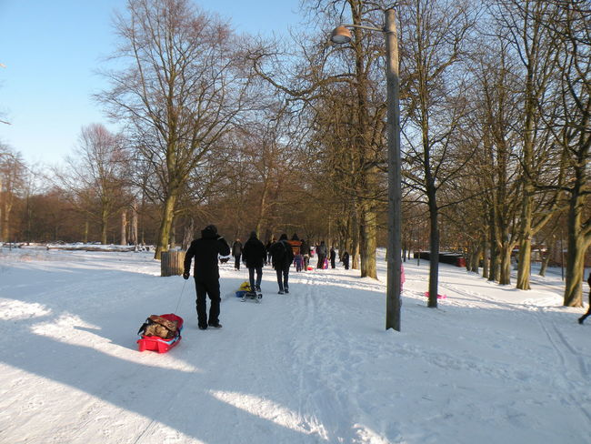 Winter Snow Cold Temperature Tree Child Warm Clothing Rear View Tobogganing Outdoors People Bare Tree Adult Day Snowing Nature Blue Sky Sunny Sunlight Dyrehaven Jægersborg Dyrehave - in Jægersborg Deer Park in Klampenborg, Denmark