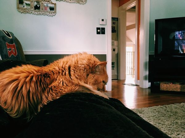 Pets Domestic Animals Animal Themes One Animal Mammal Indoors  Home Interior Relaxation Domestic Cat Cat Blanket Cuddles Snuggles No People Day At Home Architecture Close-up