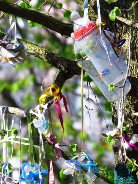 Adolescence  Adulthood Baby Baby Bottle BABY STEPS Bottles Branches Childhood Children Comforter Coming Of Age Dummy Growing Up Hanging Kids Growing Up Outdoors Pacies Pacifier Pacifier Tree Ribbon Schnuller Schnullerbaum Soother Tree Vial