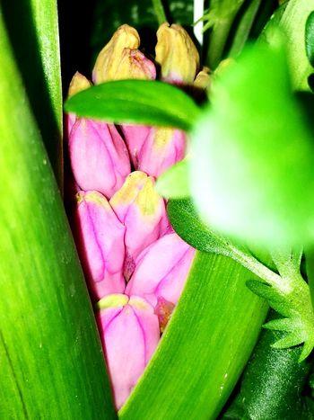 Easter Plant Flowering Plant Flower Freshness Beauty In Nature Green Color Inner Power