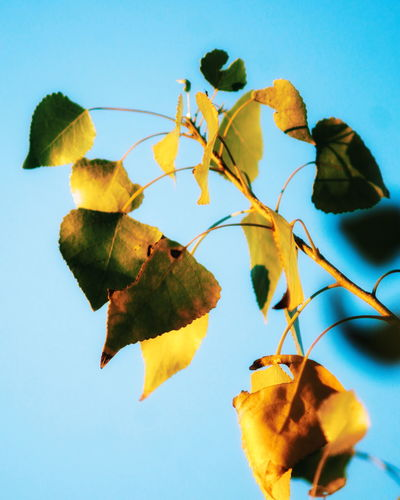 Leaf Plant No People Day Outdoors Nature Fragility Sky Close-up Tree Branches Against The Sky Beauty In Nature Macro
